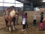 24.04.2019 OFP 2019 - Rund ums Pferd